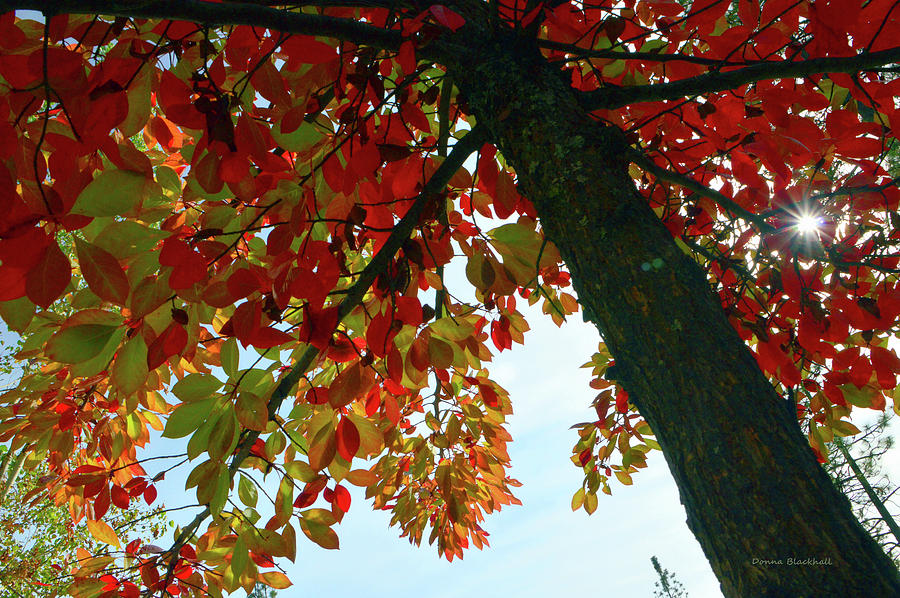 Fall Leaves Photograph - Made In The Shade by Donna Blackhall