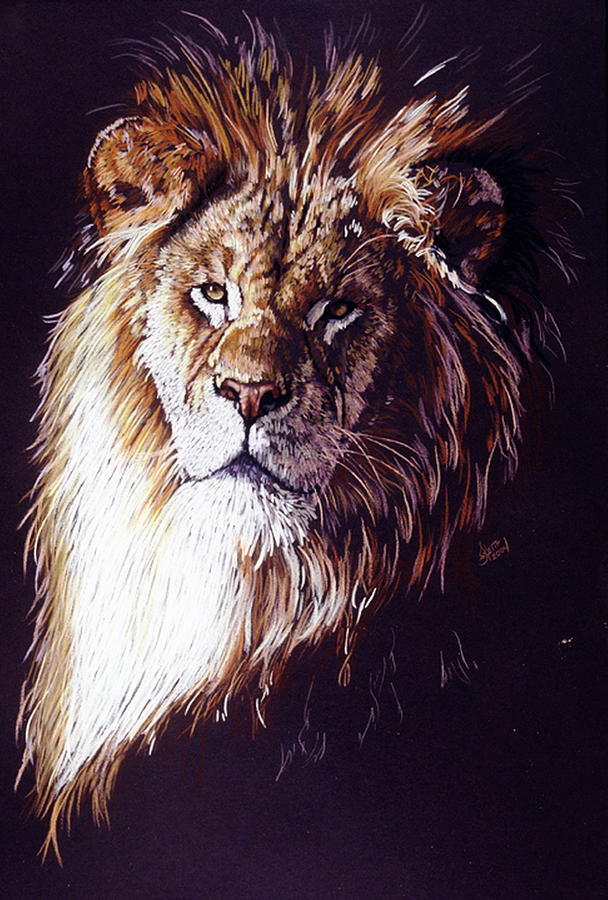 Lion Drawing - Maestro by Barbara Keith