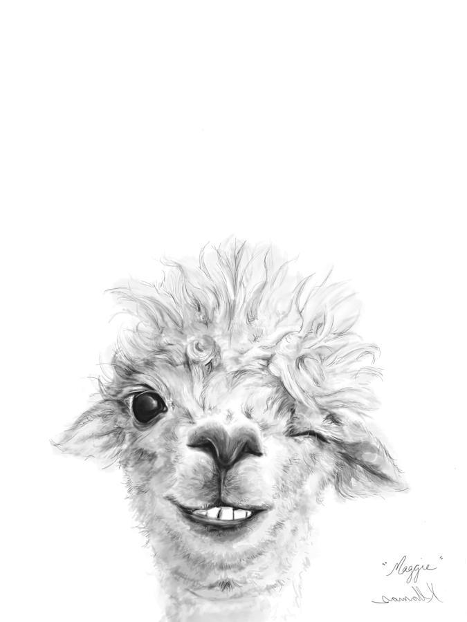 Llamas Drawing - Maggie by K Llamas
