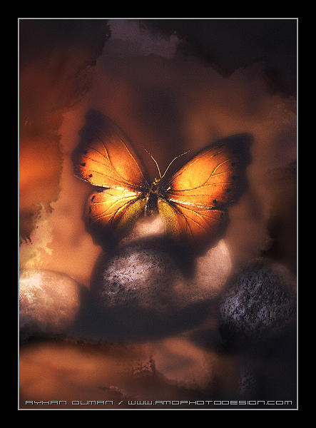 Butterfly Photograph - Magic Butterfly by Ayhan Duman