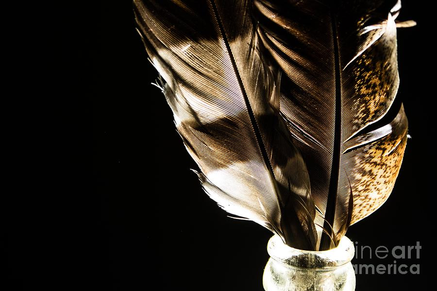 Feathers Photograph - Magic Feathers by Sue Lyon-Myrick