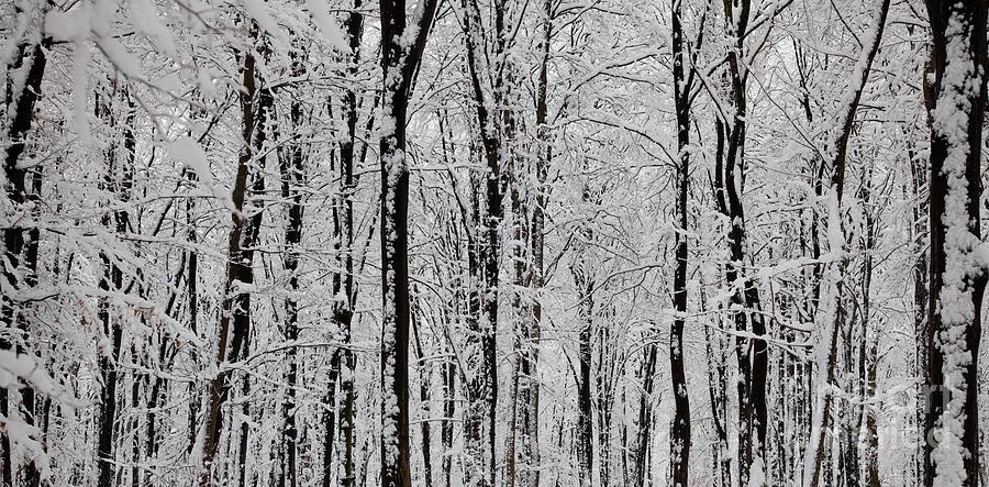 Winter Photograph - Magic Forest by Gabriela Insuratelu