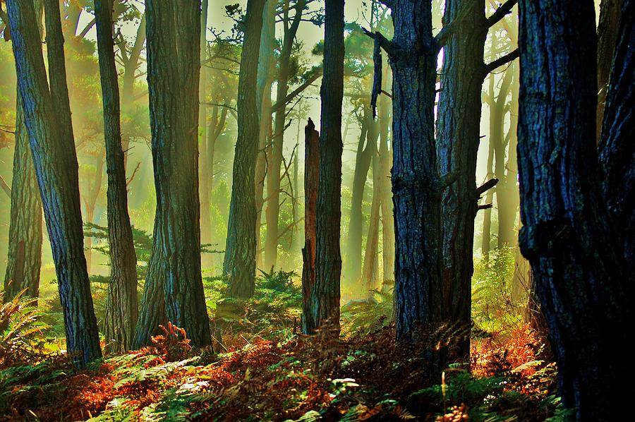 Forest Photograph - Magic Forest by Helen Carson