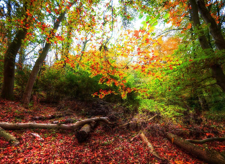 Autumn Photograph - Magic Forest by Svetlana Sewell