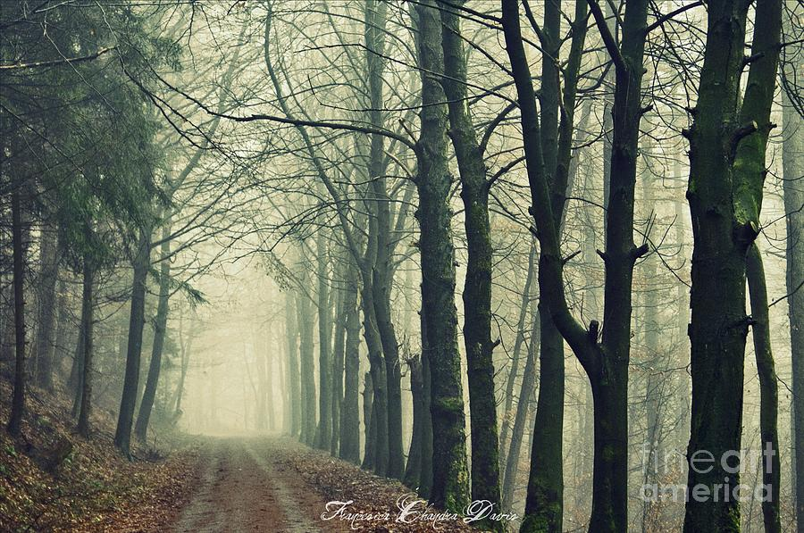 Forrest Photograph - Magic Forrest by Sacred  Muse