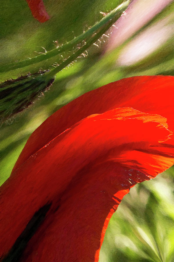 Flower Digital Art - Magic Garden 16 by Alvaro De Mendonca
