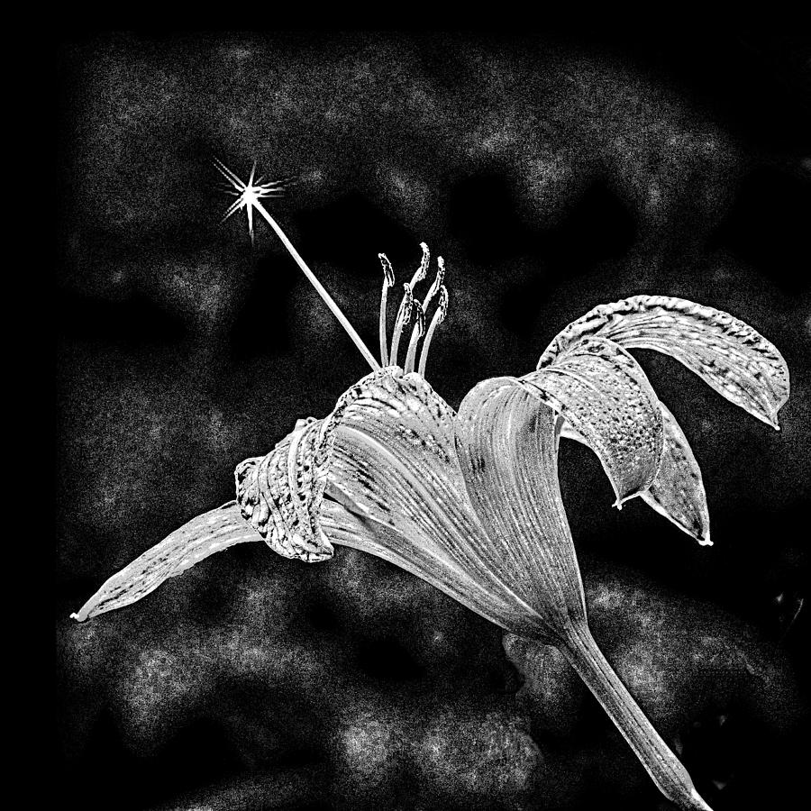 Lily Photograph - Magic Wand 3 by Michael Taggart II