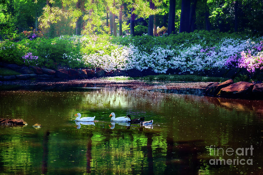 Tamyra Photograph - Magical Beauty At The Azalea Pond by Tamyra Ayles