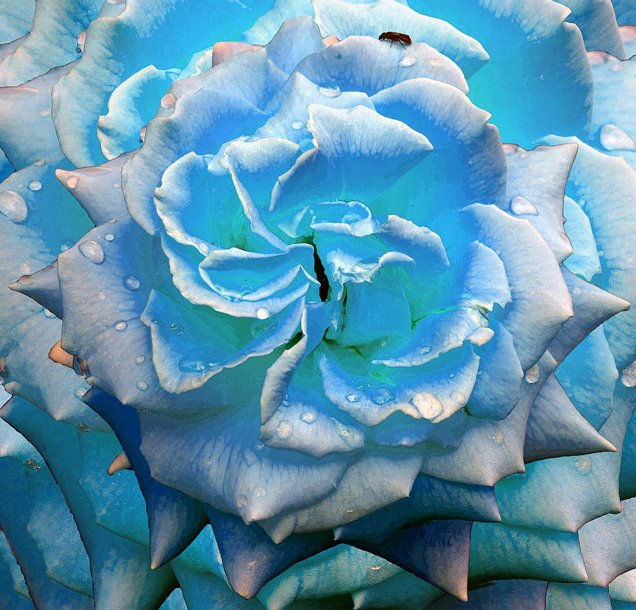 Magical Blue Rose With Raindrops Photograph
