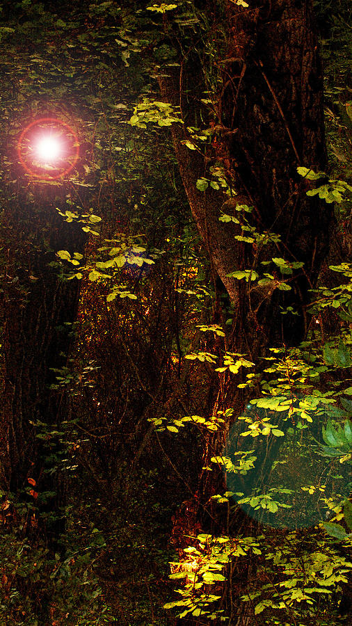 Woods Photograph - Magical Dark Woods by Jean Booth