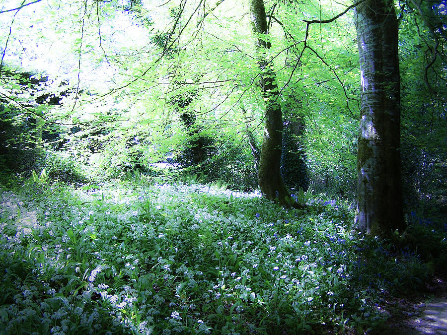 Irish Photograph - Magical Forest At Blarney Castle Ireland by Teresa Mucha