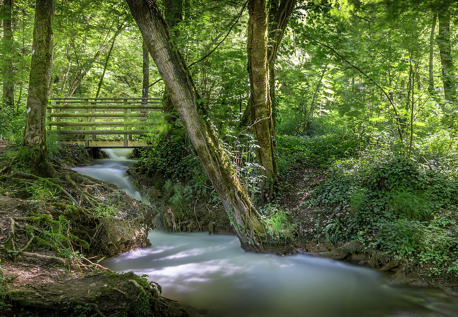 River Photograph - Magical Forest  by Georgia Fowler