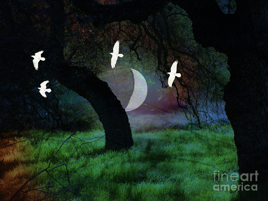 Crows Photograph - Magical Forest Night by Robert Ball