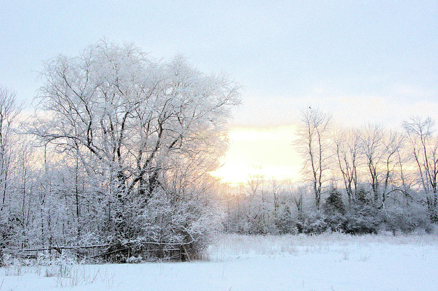 Magical March Morning by Valerie Kirkwood