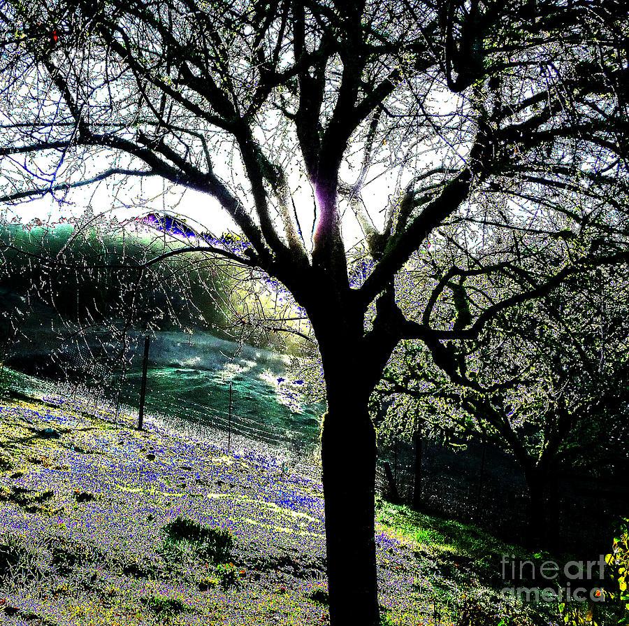 Tree Photograph - Magical Morning by JoAnn SkyWatcher