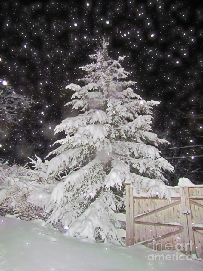 Evergreen Tree Photograph - Magical Nighttime Snow by Elizabeth Dow
