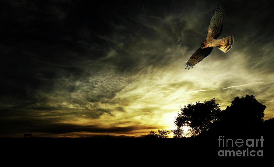 Sunset Photograph - Magical Sunset by Robert Ball