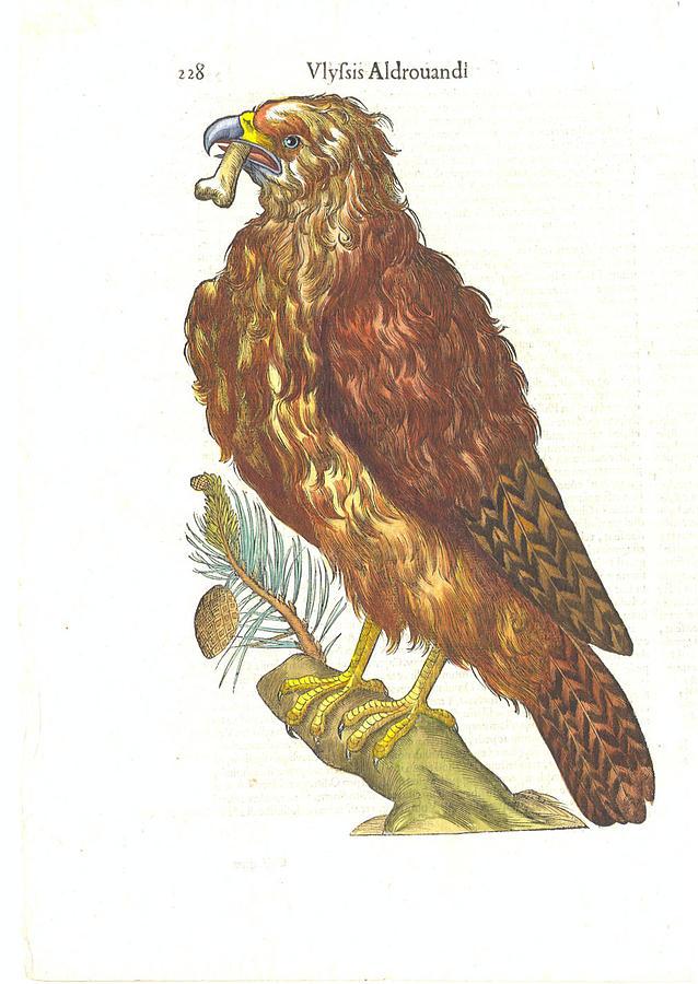 Magnificent Bird Of Prey Digital Art