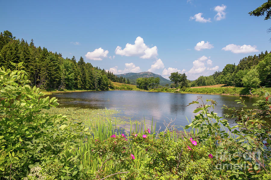 Magnificent Little Long Pond Photograph