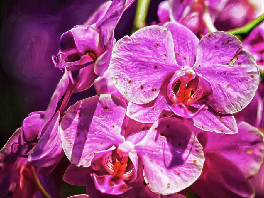 Magnificient Magenta Orchids Digital Art by Doctor MEHTA