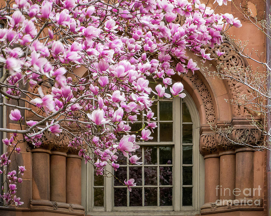 Magnolia Arch by Susan Cole Kelly