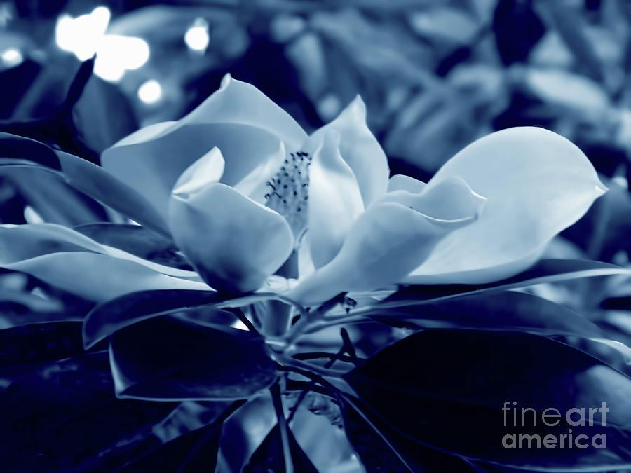 Magnolia Blossom Cyan by D Hackett