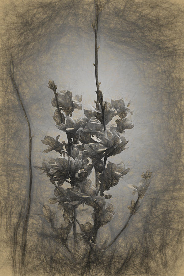 Apple Photograph - Magnolia blossom in the sky by Adrian Bud