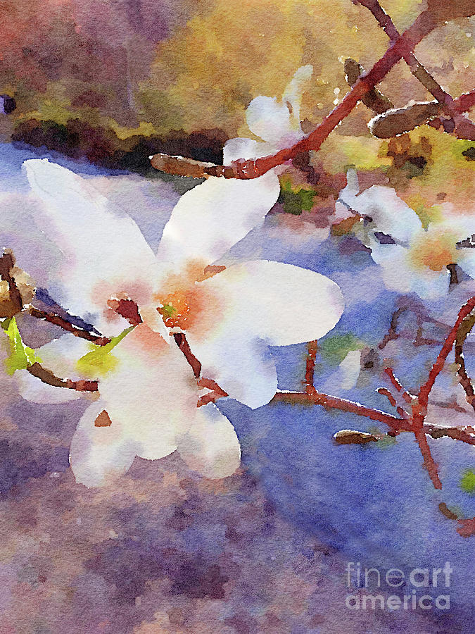 Magnolia Blossoms by Chris Scroggins