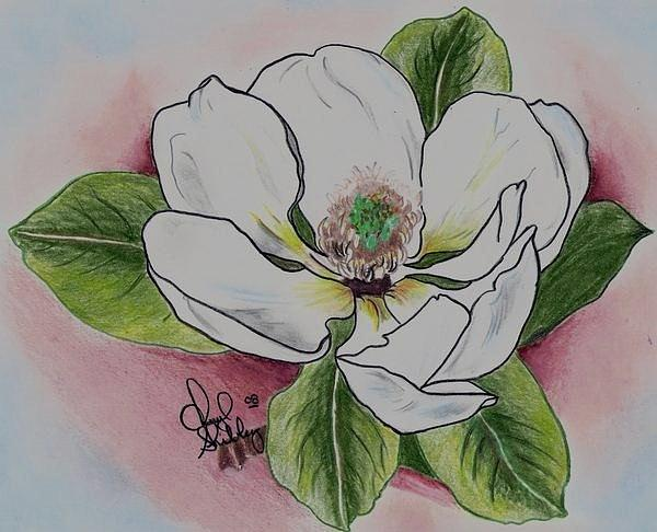 Tattoo Drawing - Magnolia by Cheryl Shibley