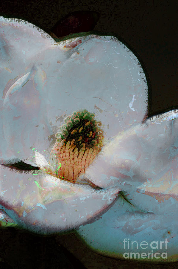 Flower Photograph - Magnolia by Donna Bentley