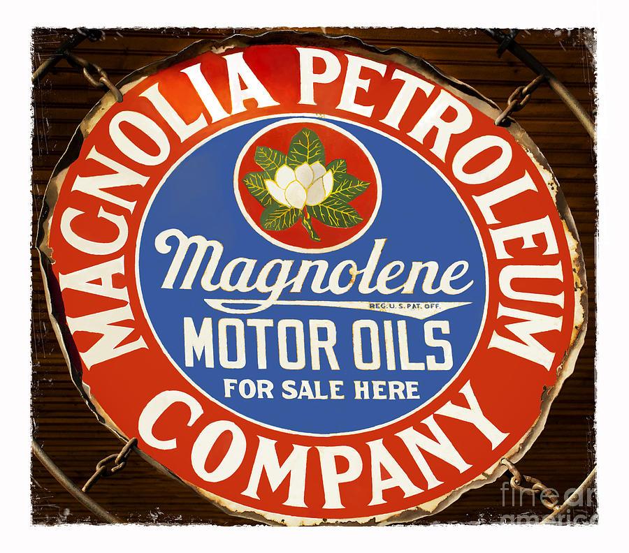 Petroleum Photograph - Magnolia by Elena Nosyreva