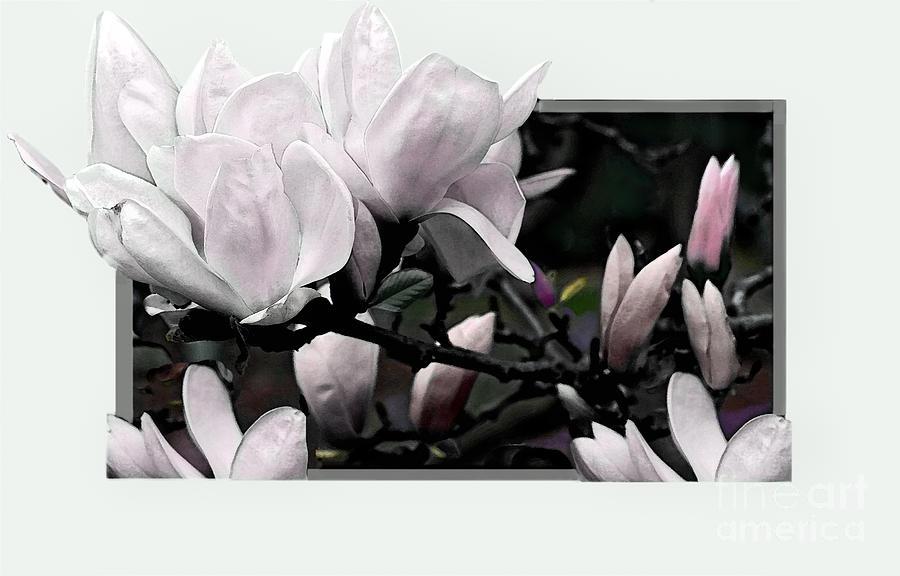Flower Photograph - Magnolia Fantasy I by Madeline Ellis