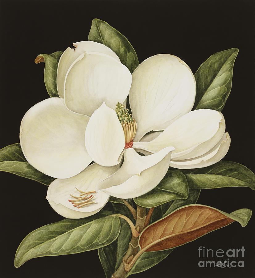 Still-life Painting - Magnolia Grandiflora by Jenny Barron