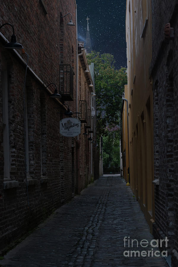 Magnolia Stary Night Alley Photograph