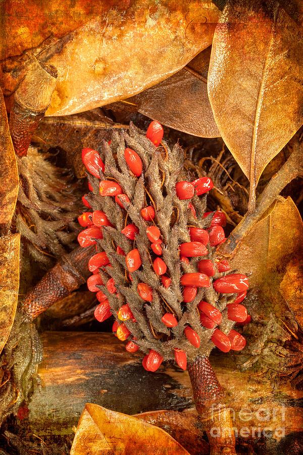 Magnolia Tree Seed Pod Ap Painting By Dan Carmichael