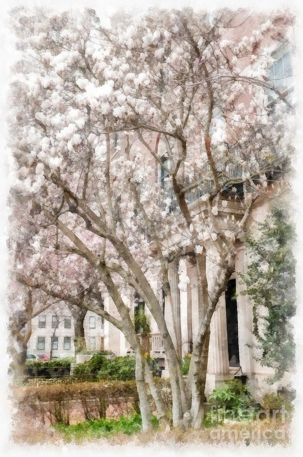 Magnolias Photograph - Magnolias In Back Bay by Edward Fielding