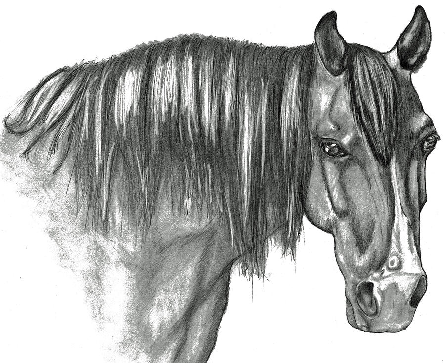 Portrait Drawing - Magnum by Crystal Suppes