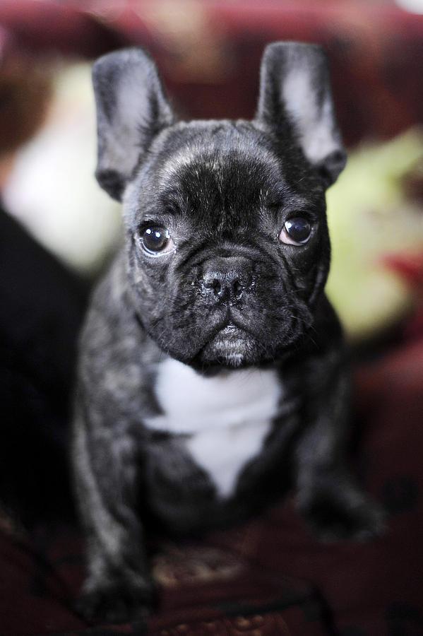 Dog Photograph - Magoo II by Rafa Rivas