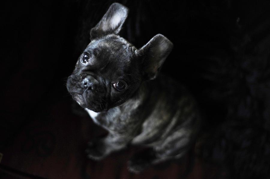 Dog Photograph - Magoo IIi by Rafa Rivas