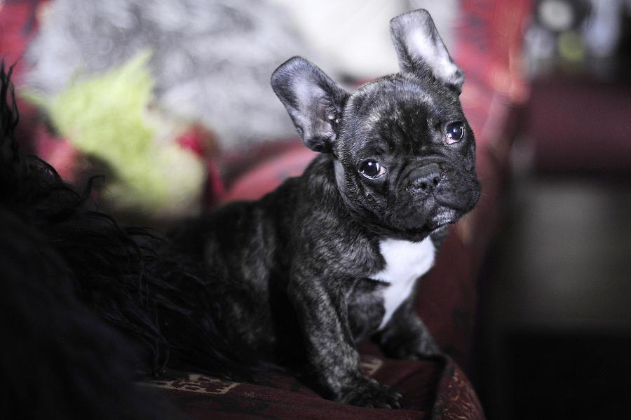 Dog Photograph - Magoo by Rafa Rivas