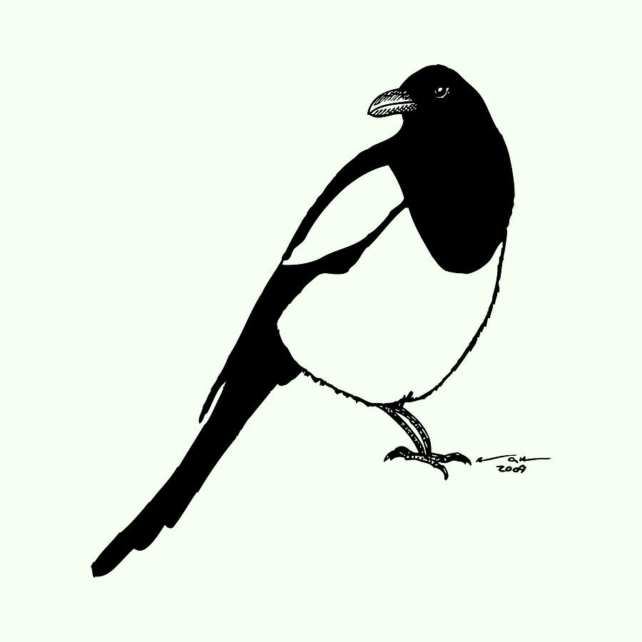 Bird Drawing - Magpie Bird by Karl Addison