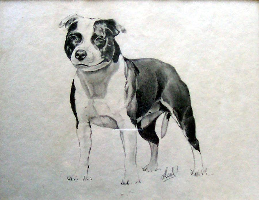 Dog Drawing - Magpie by Karl Blatch