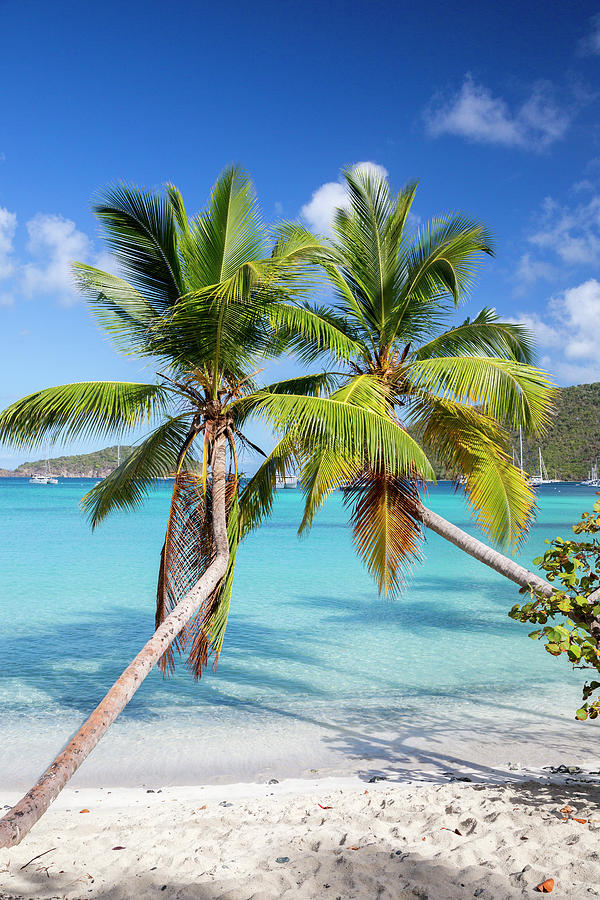 3scape Photograph - Maho Bay Palms by Adam Romanowicz