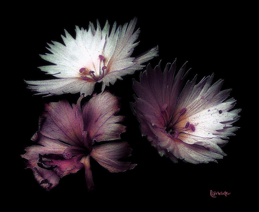 Dianthus Painting - Maiden  Mother Crone by RC deWinter