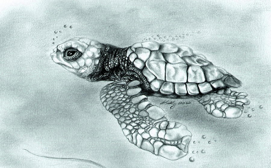 Sea Turtle Drawing - Maiden Voyage by Kathleen Kelly Thompson