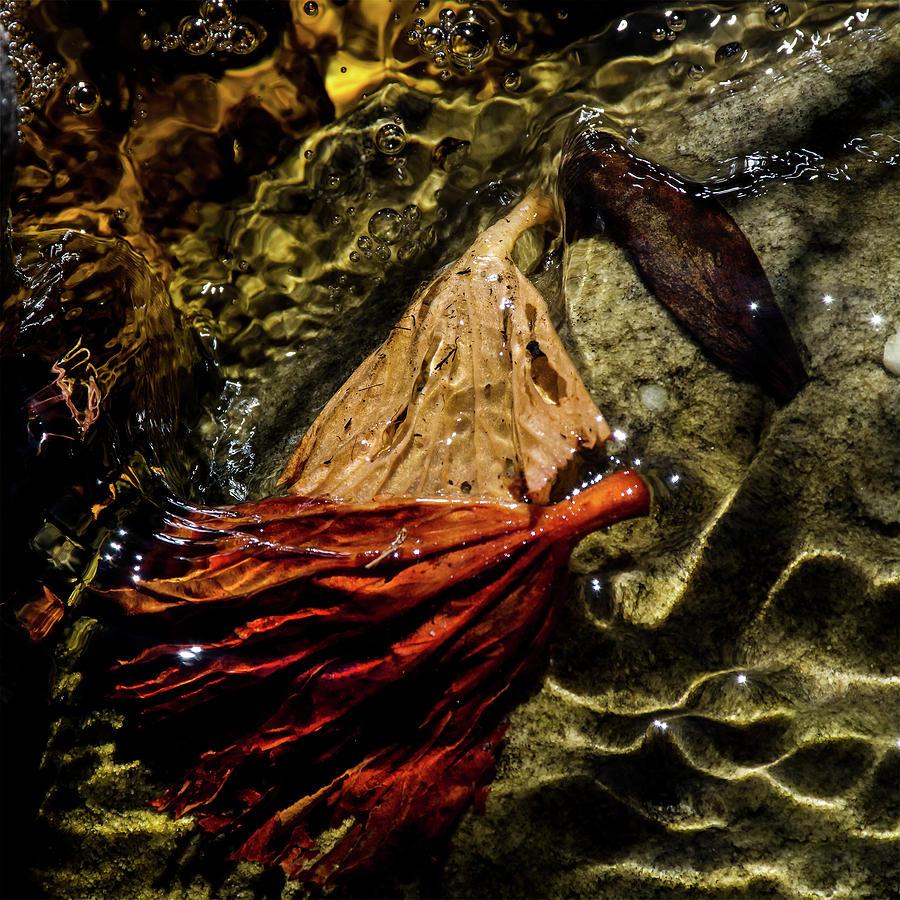 Leaves Photograph - Maiden Voyage by Simon Sephton
