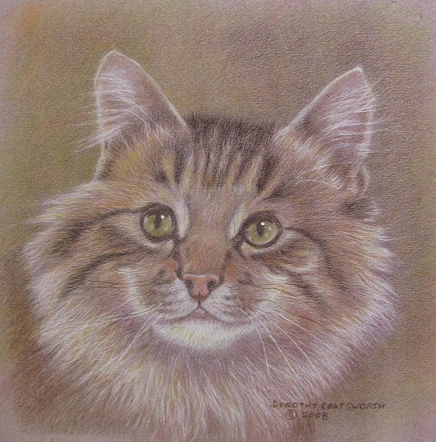 Maine Coon Cat Painting by Dorothy Coatsworth