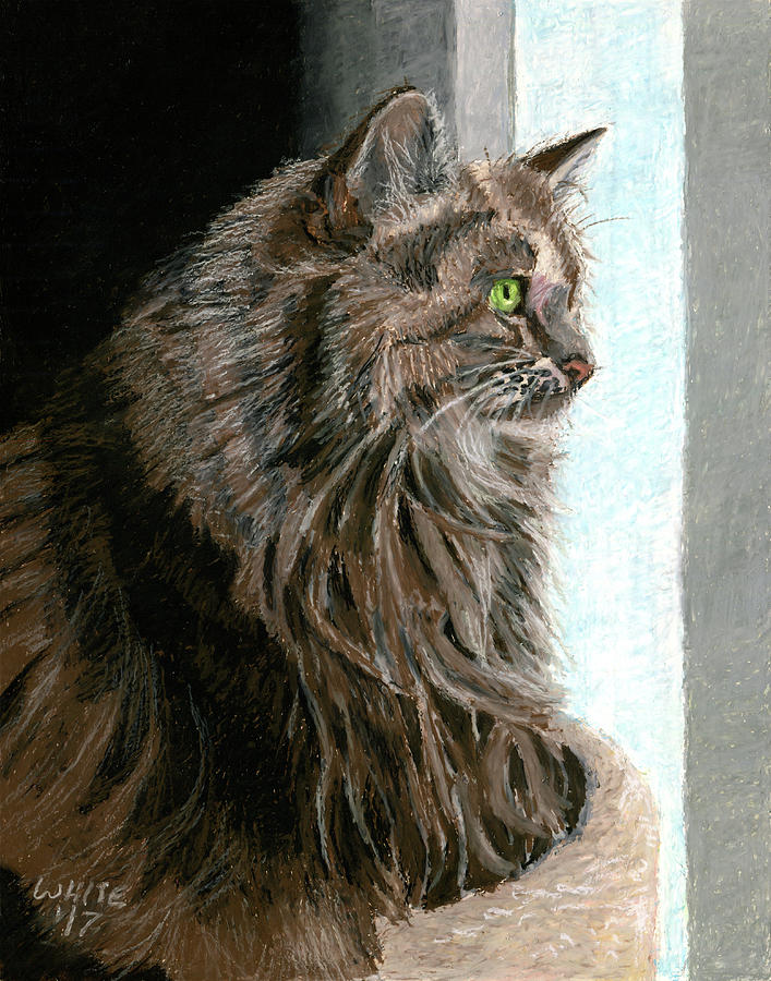 Maine Coon Cat in Window by Dominic White