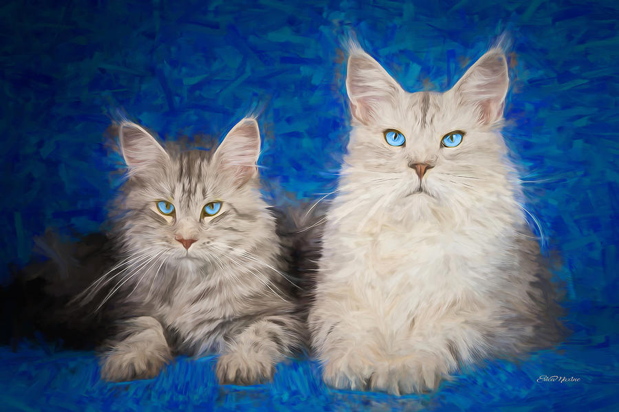 Pin by Linda Price on Maine Coon Kitties | Pinterest | Cat, Maine coon and  Animal
