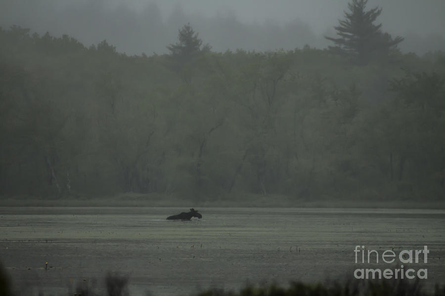 Maine Photograph